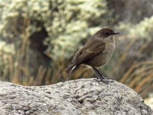 Bird in Karanga valley